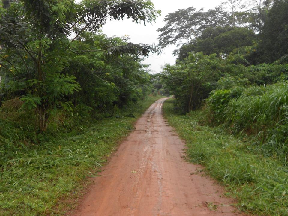 routede ngog-bassong